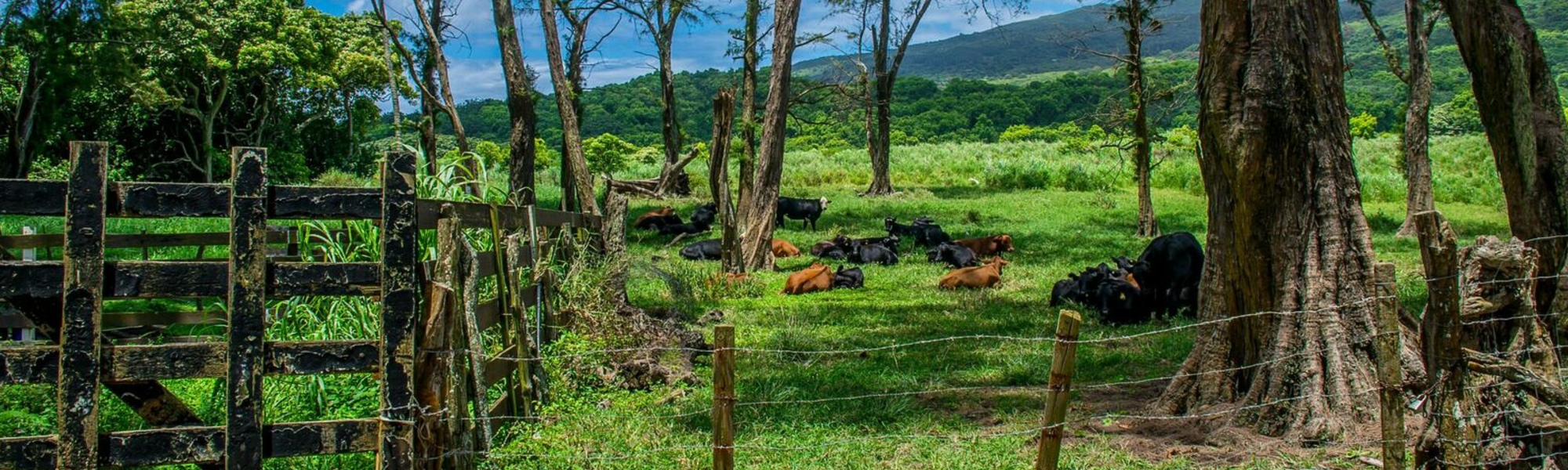 Hana Ranch and Farm Properties